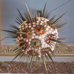 "Fig. 22 – Constant Roux, lampada in vetro a forma di radiolare ispirata alla tavola 1 delle ""Kunstformen der Natur"" di Ernst Haeckel, [1910] (Museo oceanografico, Montecarlo)"